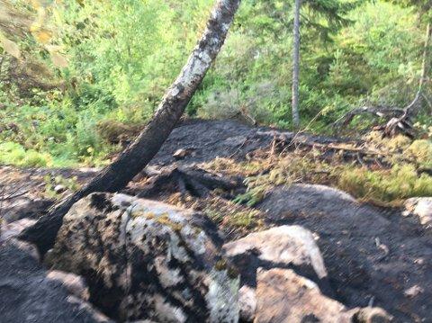 Det er tydelig spor etter lynnedslag i et tre her ved Abbortjenn. Omlag 100 meter lang og 10 til 20 meter bred, anslagsvis.