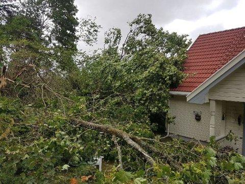 Sjanseløse mot vinden: 160-170 trær blåste overende i Øst politidistrikt fredag. Dette bildet er fra Skjeberg og Nylænde gård hvor flere store trær falt ned.
