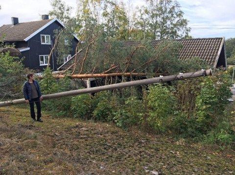 PROBLEM: Trær som blir tatt av vinden og tar med seg strømkabler i fallet har ført til at mange har mistet strømmen den siste tiden.
