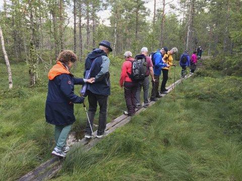 Utfordringer: Spreke deltagere «går planken» over en av Finnskogens mange myrer på vei til riksgrensen. Foto: Andreas Poppe