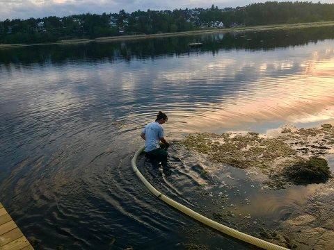 Pumpesystem: Algene ved Vispen-stranden i Skjærviken fjernes i tide før de råtner og gir forferdelig stank. Her er Chrix Botnen fra Marinesanering i full sving onsdag kveld.