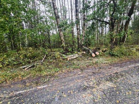 Nå ligger treet som sperret veien på Hvaler i biter i grøfta.