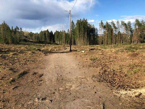 Det er tørt i skogen og har vært skogbrannfare lenge., og det har en årsak: Årets april har vært usedvanlig tørr.