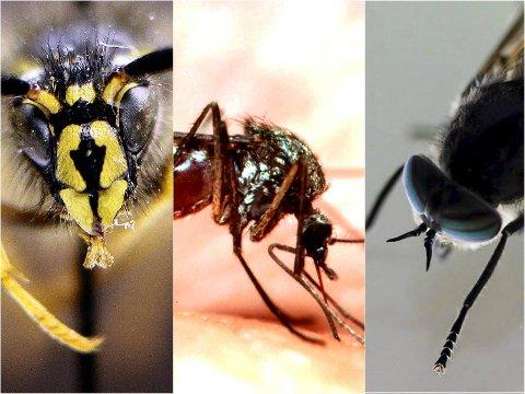 PÅ VEI: Jada, både veps, mygg og klegg kommer med varmen snart. Arkivfoto.