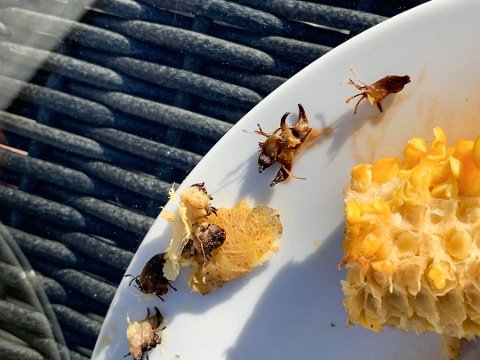 LÅ INNI FOLIEN: Dette fant Storbråten mellom poteten og folien som den var pakket inn i. Foto: Privat