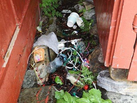 SØPPEL: Dette synet møtte Lena Nergård i Kvitvikfjæra like ved der hun bor, etter helga. Etter fem år har hun fått nok av å plukke søppel etter andre.