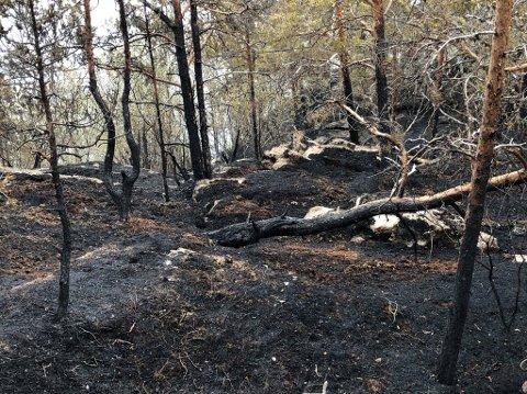 SVARTSVIDD: Slik ser det ut dagen etter den store skogbrannen i Skjomen. Elin og Torbjørn Sandvik eier området der det brant. De anslår at mellom 100-200 mål ble avsvidd i brannen. Nå er de glad for at det ikke gikk verre.