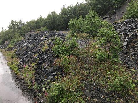 UBRUKT RESSURS: Store mengder asfaltflak har vært lagret langs E6 ved Emmenes i årevis. Narvik kommune har gjort noen uttak for gjenbruk, men i all hovedsak har massene ligget urørt, og fyllingen har vært til bekymring og irritasjon for naboer. Nå har kommunen en plan for å få fjernet asfalten og bruke den på nytt. Det er i så fall god grønn tenkning.