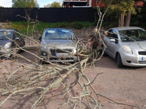 FALT OVER: Et tre ved parkeringsplassen på Nordskogen barnehage falt over en bil.
