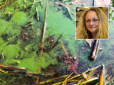 UØNSKET: Blågrønnalger er egentlig en gruppe bakterier som heter cyanobakterier. Hvis man bader i vann med høyt innhold av cyanobakterier, kan man få utslett, hudirritasjoner eller forgiftning. Miljørådgiver Camilla Fossum Pettersen liker ikke at algene har dukket opp så tidlig på sommeren.