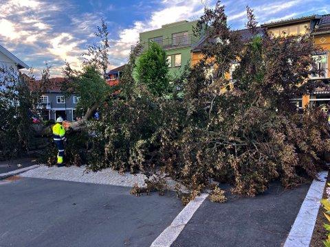 JOBB: Brannvesenet ble nødt til å jobbe litt utover kvelden for å få fjernet det store treet som falt.