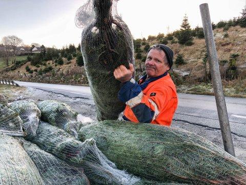 Paul Kyllingstad har hugget mer enn normalt i juletrefeltet på Bråstein denne vinteren. Planen var at noen av trærne skulle få vokse en god stund til, men nå må de vike plassen til fordel for ny vei.