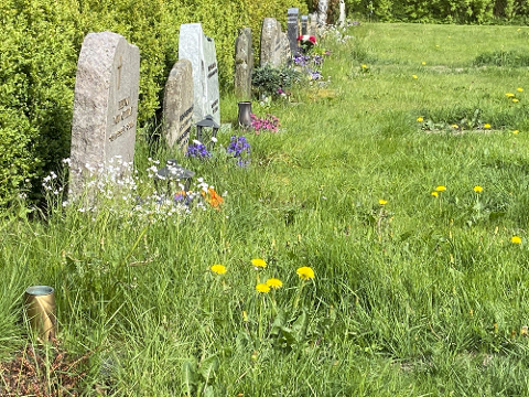 Gresset ved rundt gravene ved Oltedal kirke hadde fått vokst lovlig høyt når dette bilde ble tatt sent i forrige uke.