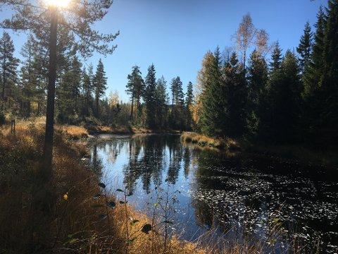 FINT: Det blir en fin dag i skogen også tirsdag