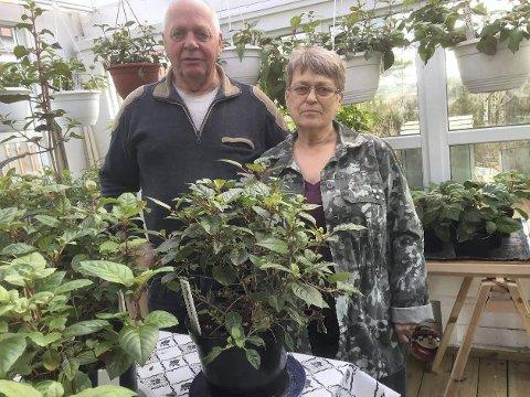 I vekst: Det spirer og gror i drivhusene til Annie og Hans Opås på Flisa. Om kort tid, står det meste i blomst og kan settes ut når nattefrosten har gitt seg.
