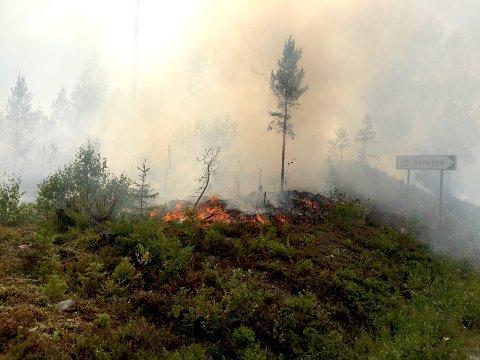 Nesten daglig bryter det ut skogbranner, og nå trengs det mye regn for å redusere skogbrannfaren.