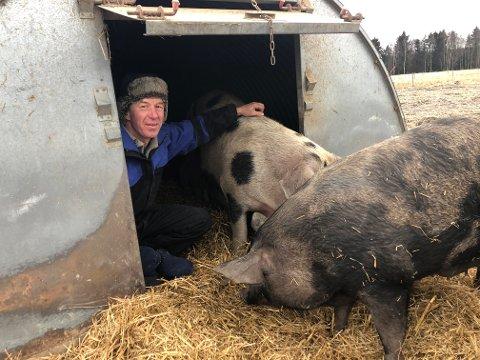 Heinrich Jung sine griser lever et fritt liv ute på jordene i sine spesielle hus. I høst ble bonden fra Arneberg sertifisert med Dyrevernmerket for gris