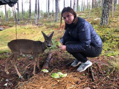 REDDET BAMBI: Helene Søvik Helgeberg reddet rådyrkillingen Bambi da hun fant henne i juni. Nå trives rådyret på Finnskogen.