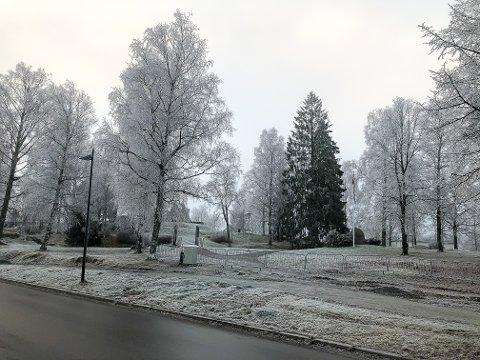 Tåka gir et nesten svart-hvitt bilde med trær lodne av rimfrost i Byparken klokka 10.00 fredag.