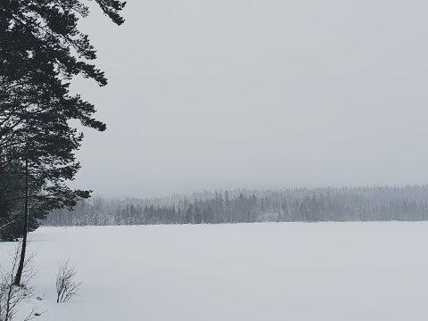 DET SNØR: Det snør over Deisjøen mandag, noe som kan bety gode forhold for å spore ulv. Foto: Miljødirektoratet