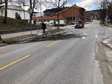 TRE I VEIEN: Været skaper problemer over hele distriktet. Mandag formiddag røsket vinden med seg en svær grein, som ble liggende midt i Storgata ved innkjøringen til Rådhus-Teatret.