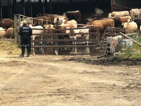Dette bildet ble tatt før opplastingen av dyrene startet.