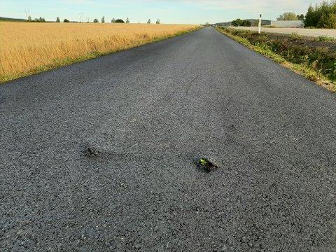 UGRESS: Her kan man tydelig se at ugresset har funnet veien ut gjennom den nye asfalten.