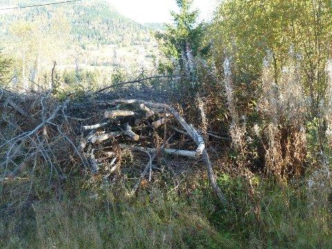 Kvisthaugen ligger igjen på tomta.