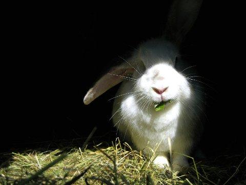 NABOFERIE: Politiet prøvde å hjelpe ei jente å få fram en kanin som hadde gjemt seg under naboens veranda. Illustrasjonsfoto: Colourbox.com