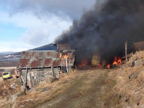 BRANN: Låven på Lesja ble raskt overtent. Fire dyr ble reddet ut, men disse ble avlivet.