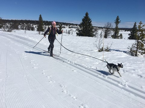 BÅNDTVANG: Skal du på skitur med hund i Gausdal, må du huske på at det nå er innført ekstraordinær båndtvang.