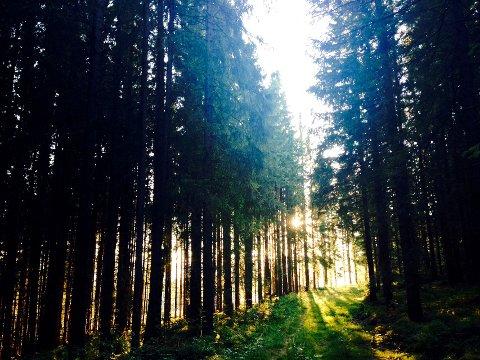 TRYGG BLANT TRÆRNE: «I skogen er du hjemme» skriver Tordis Ørjasæter til sønnen Dag Tore i boka «Kjærlig  heten har sitt eget språk». - I boka tegner jeg han som har så lite ord gjennom hans få ord, sier Ørjasæter.     Foto: Ingunn Aagedal Schinstad