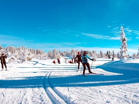 HUNDEFRITT: Mange foretrekker å gå på ski uten at løse hunder forstyrrer turen. Illustrasjonsfoto.
