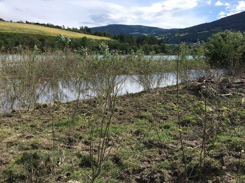 Fylkesmannen mener det er fare for at vegetasjonen vil forsvinne helt hvis storfe får beite langs elvekanten.