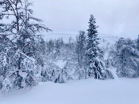 Snøskred i Valsfjell på Gålå lørdag 23. januar. Øverst på bildet ses den minst halvannen meter høye bruddkanten.