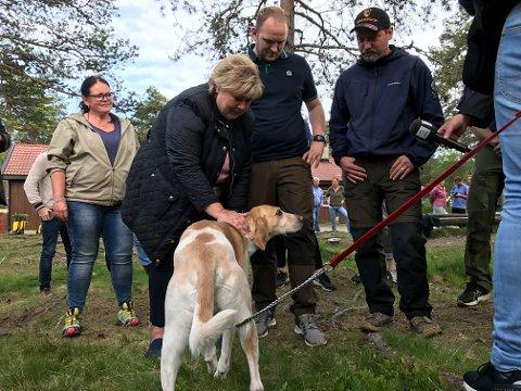 Statsmnister Erna Solberg fikk hilse på foxhound-hundene på Åstjern.