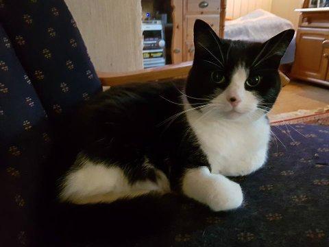 SØT: Denne søte hunnkatten ble funnet i området mellom Esso og andfossen på Jaren.