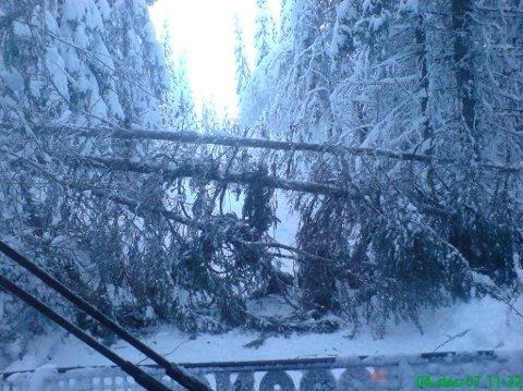 GÅR UT OVER SKOGEN: Stort snøfall ødelegger skogen. Illustrasjonsfoto: Arild Bernstrøm
