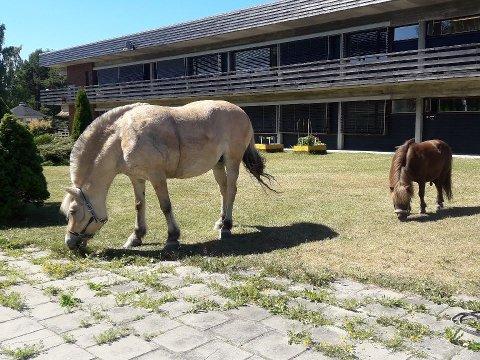 GJESTER: Harald Kristiansen og hestene hans var nylig på sitt tradisjonelle besøk på Lunner omsorgssenter.