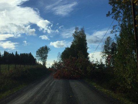 TREFALL: Et tre hadde falt over strømledningene i Vienlinna onsdag ettermiddag.