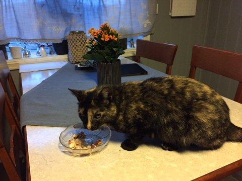SAVNET: Har du sett denne katten? Jentepusen har vært savnet i 14 dager.