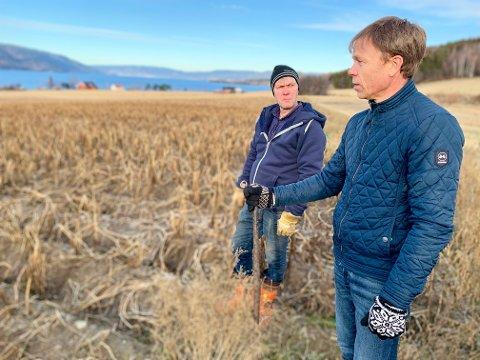 SØRGELIG: – Et sørgelig syn, sier Anders Skari (til høyre) og Jim Trælnes, og ser utover det 32 mål store jordet hvor poteten ble tatt av frosten. Bare på dette jordet brukte Trælnes settepotet for 50.000 kroner.