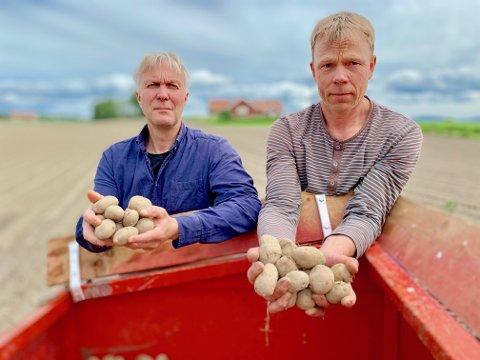 MYE IGJEN: Tingelstad-bøndene Jim Trælnes (til venstre) og Anders Skari hadde mandag flere tonn med settepotet og rundt 30 mål igjen hver å dyrke.