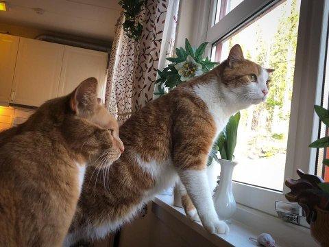 Dette er Kompis og leon som flyttet inn på Villa Skaar Jevnaker i vinter. Disse kara kom fra dyrebeskyttelsen på Ringerike og er til glede for mange beboere hos oss