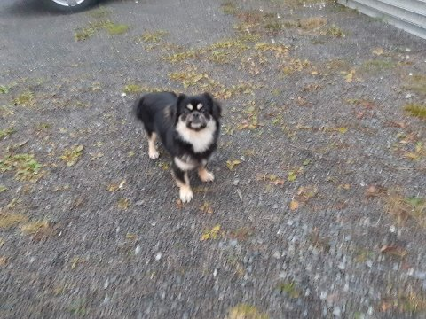 STAKK AV: Dette bildet ble tatt av hunden Maya tirsdag - dagen før hun stakk av og forsinket hele Gjøvikbanen.