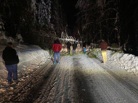 SPERRER: Et stort tre veltet og skapte trøbbel for bilistene på Skjerva tirsdag kveld.