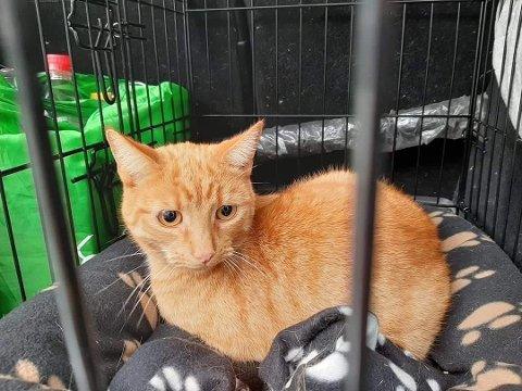 FUNNET: Katten Max ble funnet på en tilhenger i Bergen.