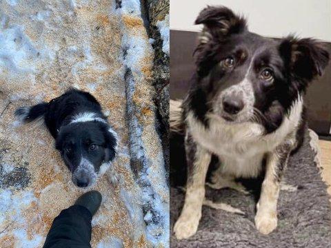 FORSVUNNET: Hunden Tina ble borte søndag ettermiddag.