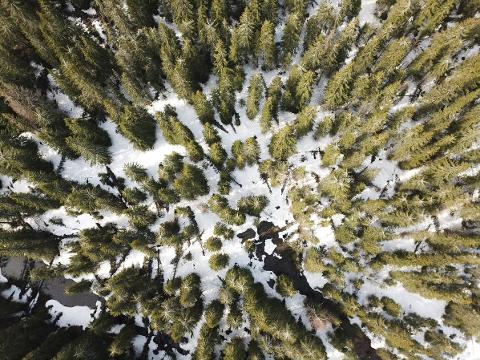 SKOGRYDDING: Nå skal det ryddes og felles trær i Mylla-området. Skadene er dokumentert via drone.