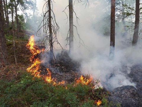Slik så det ut da Bredo Evensen kom til brannstedet i skogen ved Høk 12. juli.